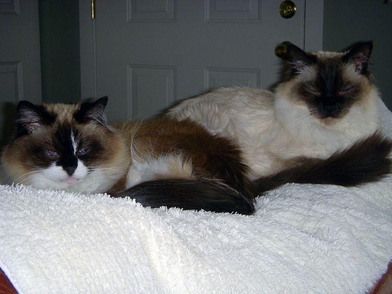 Willis and Rupert